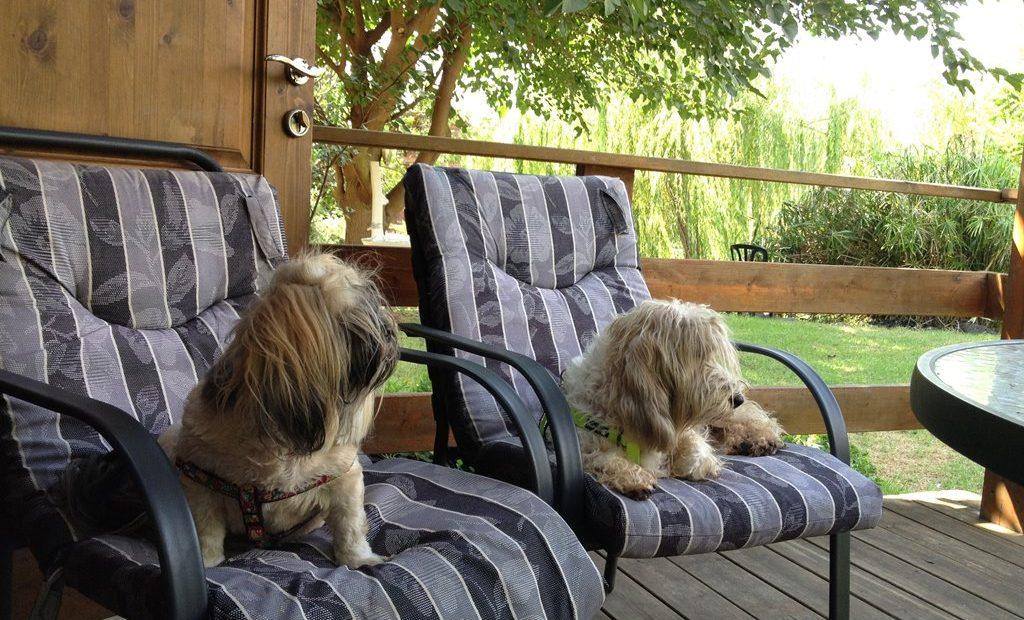 ידידותי לכלבים